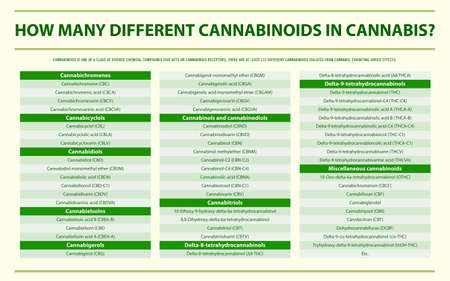 How Many Different Cannabinoids in Cannabis horizontal infographic illustration about cannabis as herbal alternative medicine and chemical therapy, healthcare and medical science vector. 向量圖像