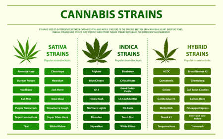 Cannabis Strains horizontal infographic illustration about cannabis as herbal alternative medicine and chemical therapy, healthcare and medical science vector.