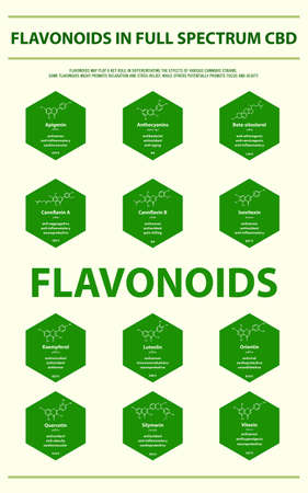 Flavonoids in Full Spectrum CBD with Structural Formulas vertical infographic illustration about cannabis as herbal alternative medicine and chemical therapy, healthcare and medical science vector.