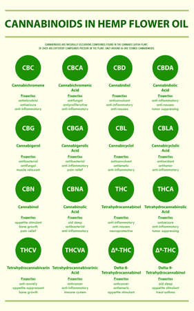 Cannabinoids in Hemp Flower Oil with Structural Formulas vertical infographic illustration about cannabis as herbal alternative medicine and chemical therapy, healthcare and medical science vector.