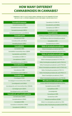 How Many Different Cannabinoids in Cannabis vertical infographic illustration about cannabis as herbal alternative medicine and chemical therapy, healthcare and medical science vector. 向量圖像