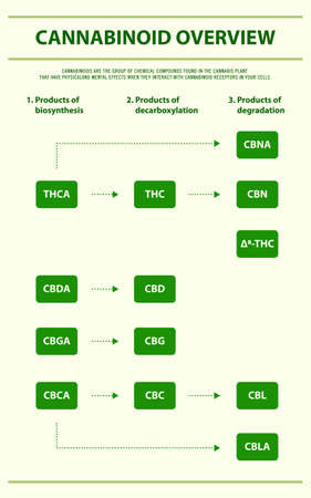 Cannabinoid Overview vertical infographic illustration about cannabis as herbal alternative medicine and chemical therapy, healthcare and medical science vector.