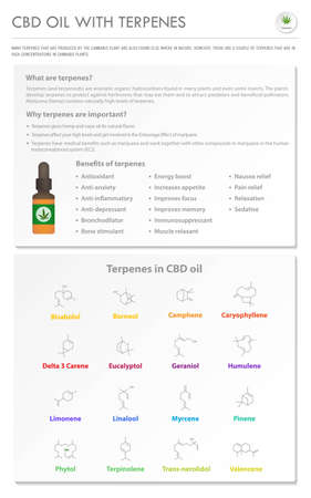 CBD Oil with Terpenes vertical business infographic illustration about cannabis as herbal alternative medicine and chemical therapy, healthcare and medical science vector.