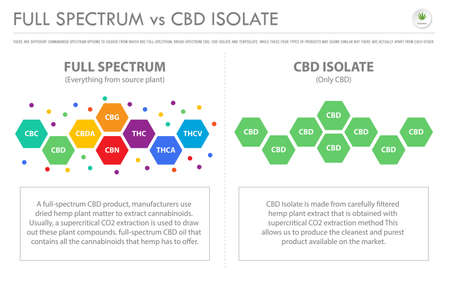 Full Spectrum vs CBD Isolate horizontal business infographic illustration about cannabis as herbal alternative medicine and chemical therapy, healthcare and medical science vector. 向量圖像