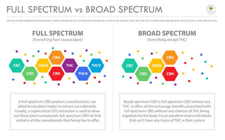 Full Spectrum vs Broad Spectrum horizontal business infographic illustration about cannabis as herbal alternative medicine and chemical therapy, healthcare and medical science vector. 向量圖像
