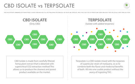 CBD Isolate vs Interpolate horizontal business infographic illustration about cannabis as herbal alternative medicine and chemical therapy, healthcare and medical science vector.