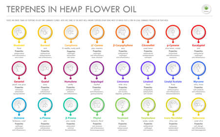 Terpenes in Hemp Flower Oil with Structural Formulas horizontal business infographic illustration about cannabis as herbal alternative medicine and chemical therapy, healthcare and medical science vector. 向量圖像