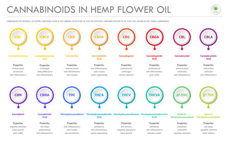 Cannabinoids in Hemp Flower Oil horizontal business infographic illustration about cannabis as herbal alternative medicine and chemical therapy, healthcare and medical science vector.