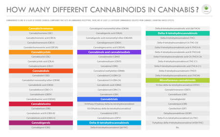 How Many Different Cannabinoids in Cannabis horizontal business infographic illustration about cannabis as herbal alternative medicine and chemical therapy, healthcare and medical science vector.