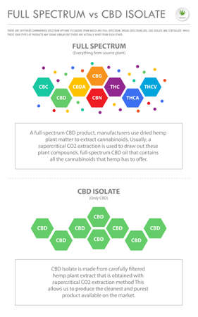 Full Spectrum vs CBD Isolate vertical business infographic illustration about cannabis as herbal alternative medicine and chemical therapy, healthcare and medical science vector.