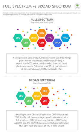 Full Spectrum vs Broad Spectrum vertical business infographic illustration about cannabis as herbal alternative medicine and chemical therapy, healthcare and medical science vector. 向量圖像