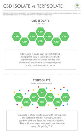 CBD Isolate vs Interpolate vertical business infographic illustration about cannabis as herbal alternative medicine and chemical therapy, healthcare and medical science vector. 向量圖像