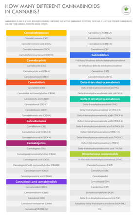 How Many Different Cannabinoids in Cannabis vertical business infographic illustration about cannabis as herbal alternative medicine and chemical therapy, healthcare and medical science vector. 向量圖像