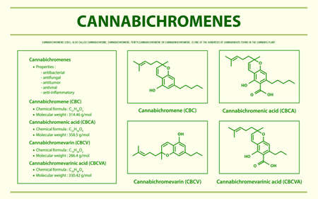 Cannabichromene CBC with Structural Formulas in Cannabis horizontal infographic illustration about cannabis as herbal alternative medicine and chemical therapy, healthcare and medical science vector. 向量圖像