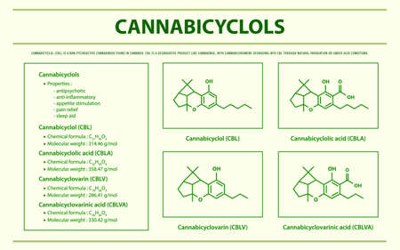 Cannabicyclol CBL with Structural Formulas in Cannabis horizontal infographic illustration about cannabis as herbal alternative medicine and chemical therapy, healthcare and medical science vector. 向量圖像