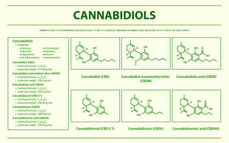 Cannabidiols CBD with Structural Formulas in Cannabis horizontal infographic illustration about cannabis as herbal alternative medicine and chemical therapy, healthcare and medical science vector.