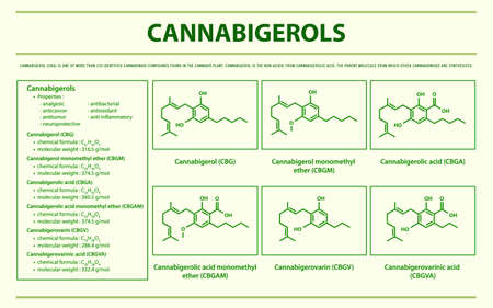 Cannabigerol CBG with Structural Formulas in Cannabis horizontal infographic illustration about cannabis as herbal alternative medicine and chemical therapy, healthcare and medical science vector.