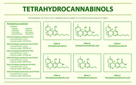 Tetrahydrocannabinol THC with Structural Formulas in Cannabis horizontal infographic illustration about cannabis as herbal alternative medicine and chemical therapy, healthcare and medical science vector.