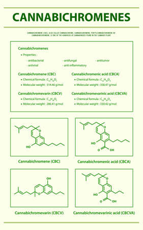 Cannabichromene CBC with Structural Formulas in Cannabis vertical infographic illustration about cannabis as herbal alternative medicine and chemical therapy, healthcare and medical science vector. 向量圖像