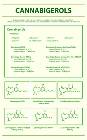 Cannabigerol CBG with Structural Formulas in Cannabis vertical infographic illustration about cannabis as herbal alternative medicine and chemical therapy, healthcare and medical science vector.