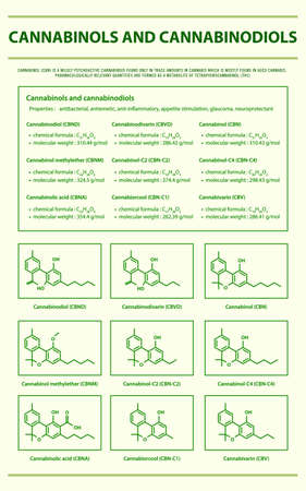 Cannabinol and Cannabinodiol CBN with Structural Formulas in Cannabis vertical infographic illustration about cannabis as herbal alternative medicine and chemical therapy, healthcare and medical science vector.