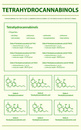 Tetrahydrocannabinol THC with Structural Formulas in Cannabis vertical infographic illustration about cannabis as herbal alternative medicine and chemical therapy, healthcare and medical science vector.