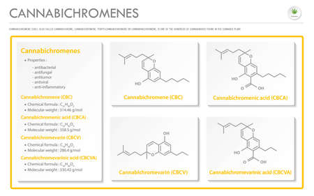 Cannabichromene CBC with Structural Formulas in Cannabis horizontal business infographic illustration about cannabis as herbal alternative medicine and chemical therapy, healthcare and medical science vector.