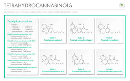 Tetrahydrocannabinol THC with Structural Formulas in Cannabis horizontal business infographic illustration about cannabis as herbal alternative medicine and chemical therapy, healthcare and medical science vector.