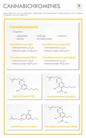 Cannabichromene CBC with Structural Formulas in Cannabis vertical business infographic illustration about cannabis as herbal alternative medicine and chemical therapy, healthcare and medical science vector. Stock Illustratie