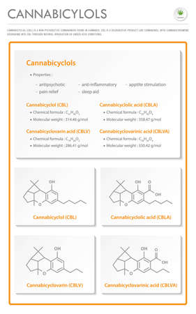 Cannabicyclol CBL with Structural Formulas in Cannabis vertical business infographic illustration about cannabis as herbal alternative medicine and chemical therapy, healthcare and medical science vector.