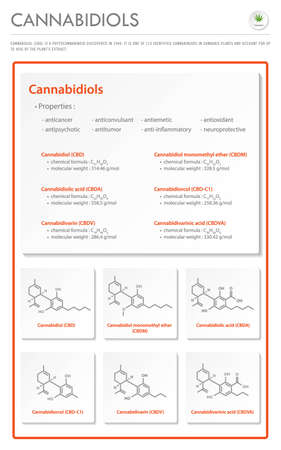 Cannabidiol CBD with Structural Formulas in Cannabis vertical business infographic illustration about cannabis as herbal alternative medicine and chemical therapy, healthcare and medical science vector.
