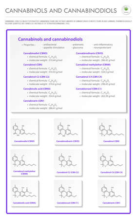 Cannabinol and Cannabinodiol CBN with Structural Formulas in Cannabis vertical business infographic illustration about cannabis as herbal alternative medicine and chemical therapy, healthcare and medical science vector.