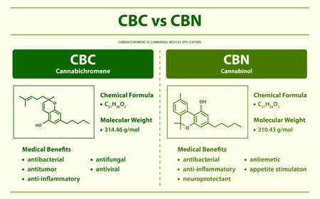 CBC vs CBN, Cannabichromene vs Cannabinol horizontal infographic illustration about cannabis as herbal alternative medicine and chemical therapy, healthcare and medical science vector. 向量圖像