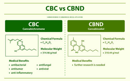 CBC vs CBND, Cannabichromene vs Cannabinodiol horizontal infographic illustration about cannabis as herbal alternative medicine and chemical therapy, healthcare and medical science vector. Ilustração