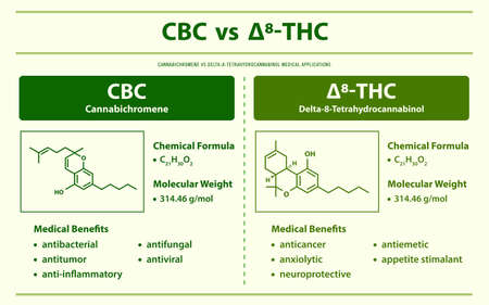 CBC vs ∆8-THC, Cannabichromene vs Delta 8 Tetrahydrocannabinol horizontal infographic illustration about cannabis as herbal alternative medicine and chemical therapy, healthcare and medical science vector.
