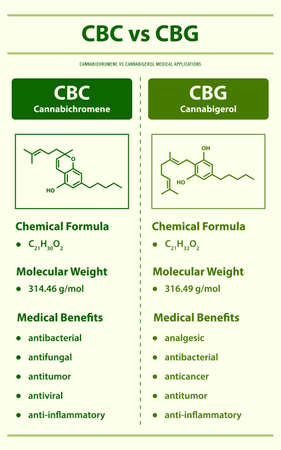 CBC vs CBG, Cannabichromene vs Cannabigerol vertical infographic illustration about cannabis as herbal alternative medicine and chemical therapy, healthcare and medical science vector. Ilustração
