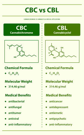 CBC vs CBD, Cannabichromene vs Cannabidiol vertical infographic illustration about cannabis as herbal alternative medicine and chemical therapy, healthcare and medical science vector.