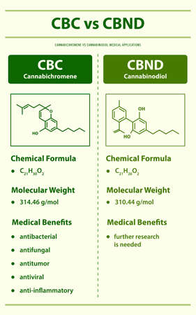CBC vs CBND, Cannabichromene vs Cannabinodiol vertical infographic illustration about cannabis as herbal alternative medicine and chemical therapy, healthcare and medical science vector.