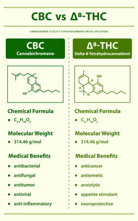 CBC vs ∆8-THC, Cannabichromene vs Delta 8 Tetrahydrocannabinol vertical infographic illustration about cannabis as herbal alternative medicine and chemical therapy, healthcare and medical science vector. 矢量图像