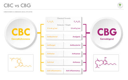 CBC vs CBD, Cannabichromene vs Cannabigerol horizontal business infographic illustration about cannabis as herbal alternative medicine and chemical therapy, healthcare and medical science vector.