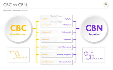 CBC vs CBN, Cannabichromene vs Cannabinol horizontal business infographic illustration about cannabis as herbal alternative medicine and chemical therapy, healthcare and medical science vector.