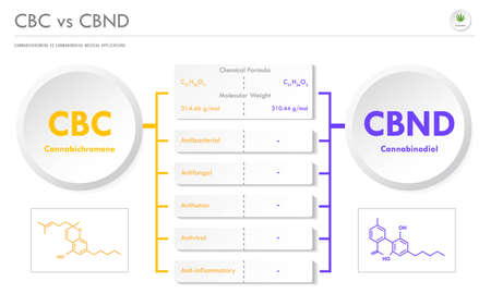 CBC vs CBND, Cannabichromene vs Cannabinodiol horizontal business infographic illustration about cannabis as herbal alternative medicine and chemical therapy, healthcare and medical science vector.
