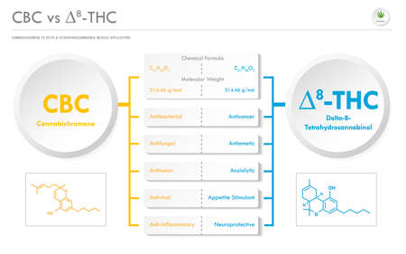 CBC vs ∆8-THC, Cannabichromene vs Delta 8 Tetrahydrocannabinol horizontal business infographic illustration about cannabis as herbal alternative medicine and chemical therapy, healthcare and medical science vector. 矢量图像