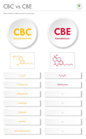 CBC vs CBE, Cannabichromene vs Cannabielsoin vertical business infographic illustration about cannabis as herbal alternative medicine and chemical therapy, healthcare and medical science vector. Ilustração