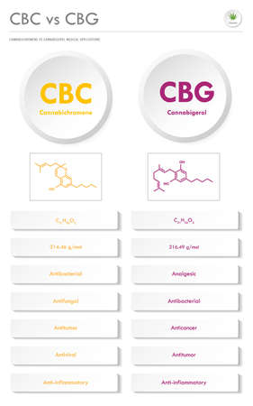CBC vs CBG, Cannabichromene vs Cannabigerol vertical business infographic illustration about cannabis as herbal alternative medicine and chemical therapy, healthcare and medical science vector.