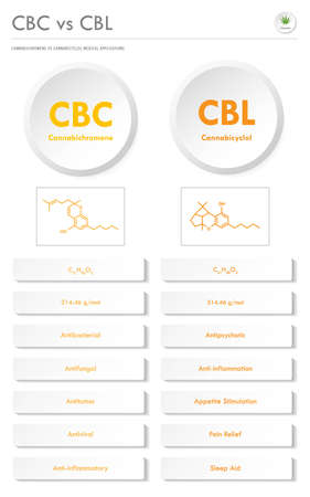 CBC vs CBL, Cannabichromene vs Cannabicyclol vertical business infographic illustration about cannabis as herbal alternative medicine and chemical therapy, healthcare and medical science vector. Ilustração