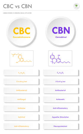 CBC vs CBN, Cannabichromene vs Cannabinol vertical business infographic illustration about cannabis as herbal alternative medicine and chemical therapy, healthcare and medical science vector. 向量圖像