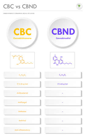 CBC vs CBND, Cannabichromene vs Cannabinodiol vertical business infographic illustration about cannabis as herbal alternative medicine and chemical therapy, healthcare and medical science vector.