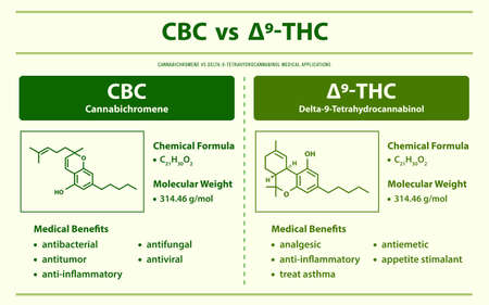 CBC vs ∆9-THC, Cannabichromene vs Delta 9 Tetrahydrocannabinol horizontal infographic illustration about cannabis as herbal alternative medicine and chemical therapy, healthcare and medical science vector. Ilustração