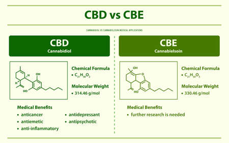 CBD vs CBE, Cannabidiol vs Cannabielsoin horizontal infographic illustration about cannabis as herbal alternative medicine and chemical therapy, healthcare and medical science vector. Ilustração